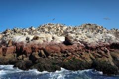 море Перу paracas львов острова птиц Стоковые Фото
