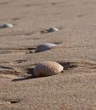 море песка пляжа лежа обстреливает влажную Стоковая Фотография