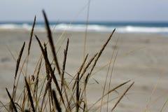 море песка травы дюн стоковая фотография rf