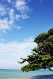 Море, песок, дерево и ясное небо в Таиланде Стоковое Изображение RF