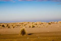 Море, пляж и травы в зиме Стоковые Фото