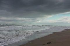 Море, пляж и травы в зиме Стоковое Изображение