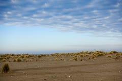 Море, пляж и травы в зиме Стоковое Фото