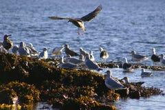 море посадки птицы приходя Стоковые Фотографии RF