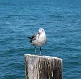 море птицы Стоковое Изображение
