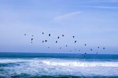 море птиц Стоковые Изображения