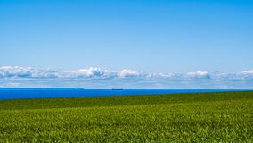 Море пшеничного поля и прибрежные сосуды торговой операции Стоковое фото RF