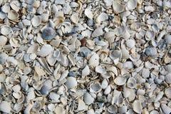 Море пляжа Флориды Fort Myers обстреливает песок США Стоковое Фото