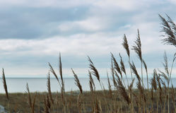 Море, пляж, море, песок, дюны, трава, Балтийское море Стоковое Изображение