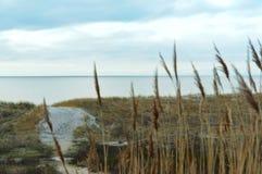 Море, пляж, море, песок, дюны, трава, Балтийское море Стоковое Фото