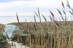 Море, пляж, море, песок, дюны, трава, Балтийское море Стоковые Изображения