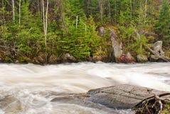 море реки чайки bwcaw стоковые фото