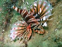 море рифа жизни коралла Стоковое Изображение