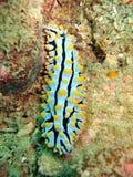 море рифа жизни коралла Стоковые Фото