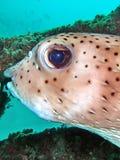 море рифа жизни коралла Стоковое Изображение RF