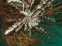 море рифа жизни коралла Стоковые Изображения