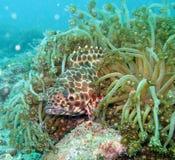 море рифа жизни коралла Стоковая Фотография
