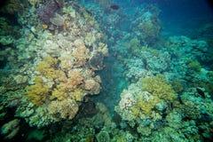 море рифа коралла красное Стоковые Фотографии RF