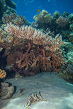море рифа коралла красное Стоковое фото RF