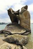 море рифа стоковое изображение rf