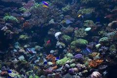 море рыб вниз Стоковые Изображения RF