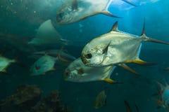 море рыб вниз Стоковое фото RF