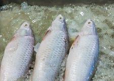 море рыб свежее Стоковое Фото