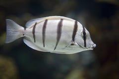море рыб Стоковое Изображение