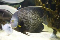 море рыб Стоковые Фото