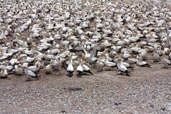 море свободного полета птиц Стоковые Изображения