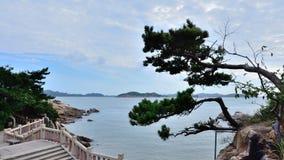 море сосенки Стоковая Фотография RF
