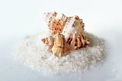 море соли состава предпосылки закрытое Стоковое Изображение