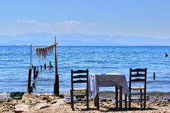 Море, таблица, осьминог стоковые фото