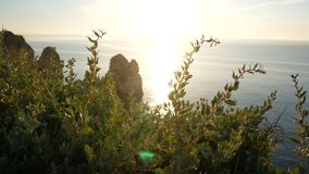 Море травы захода солнца пляжа сток-видео