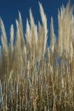 море травы стоковые изображения rf
