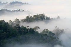 Море тумана в холме Стоковое Фото
