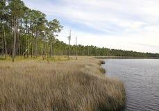 Море увидело траву на парке штата заповедника заболоченного рукава реки Tarkiln Стоковые Изображения