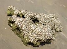 Море утеса на песке Стоковая Фотография RF