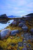 море утесов водорослей Стоковые Изображения