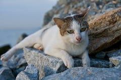 море утесов кота отдыхая Стоковая Фотография