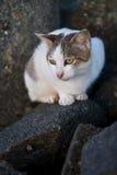 море утесов кота отдыхая Стоковые Изображения RF