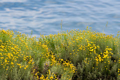 море цветка Стоковые Изображения RF