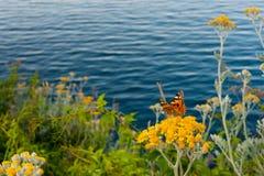 Море цветков бабочки Стоковые Изображения RF
