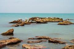 море чаек Стоковое Изображение