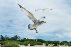 море чаек Стоковая Фотография
