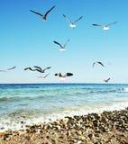 море чаек Стоковые Изображения