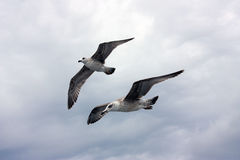 море чаек Стоковое Изображение RF