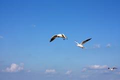 море чаек Стоковые Изображения RF