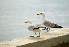 море чаек Стоковое фото RF