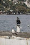 Море чайки и баклана готовя Стоковое фото RF